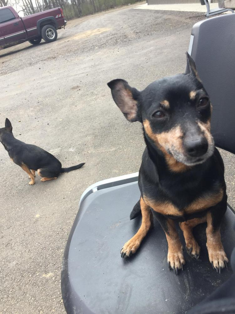Lost & Found Dogs, Cats, and Pets in South Bend, IN 46617