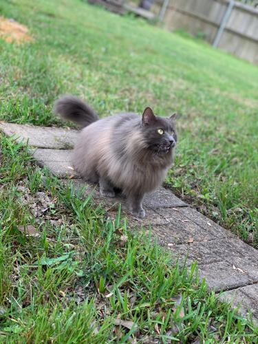 Lost Female Cat last seen Near Meadowgreen Dr & Greenwillow Dr, Port Neches, TX 77651