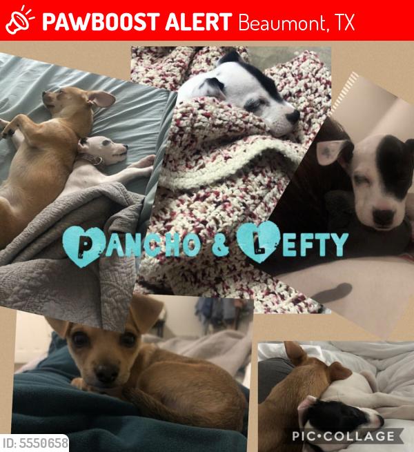 Lost Male Dog last seen Near Sheridan Oaks Dr & Wellington Pl, Beaumont, TX 77706