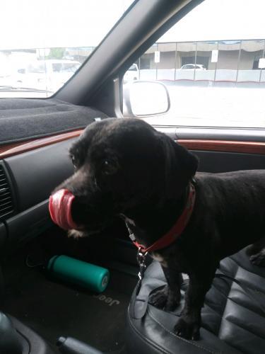 Lost Male Dog last seen Near E Coronado Rd & N 36th St, Phoenix, AZ 85008
