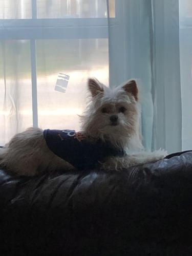 Lost Male Dog last seen Near Las Palmas Dr & Date St, Port Arthur, TX 77642