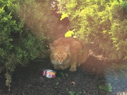 Found/Stray Unknown Cat last seen Near Willow St & Appletree Aly, Norristown, PA 19401