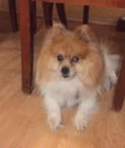 Lost Male Dog last seen Near N 34th Dr & W Echo Ln, Phoenix, AZ 85051