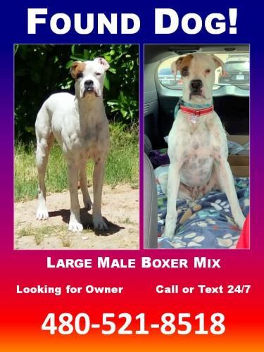 Found/Stray Male Dog last seen Near N 34th St & E Betty Elyse Ln, Phoenix, AZ 85032