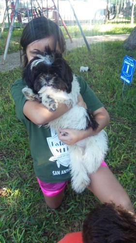 Lost & Found Dogs, Cats, and Pets in San Antonio, TX 78260