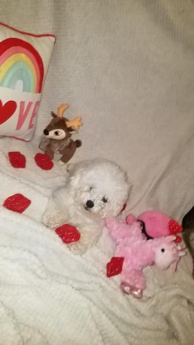 Lost Male Dog last seen Near Horn Ct & Lanai Dr, Baytown, TX 77523