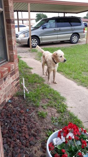 Lost & Found Dogs, Cats, and Pets in Tyler, TX 75791 - Page