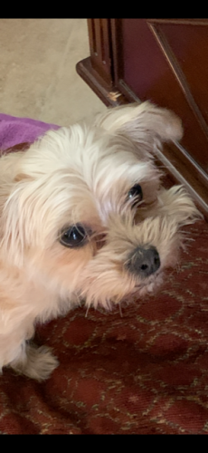 Found/Stray Female Dog last seen Near N 26th St & E Coolidge St, Phoenix, AZ 85016