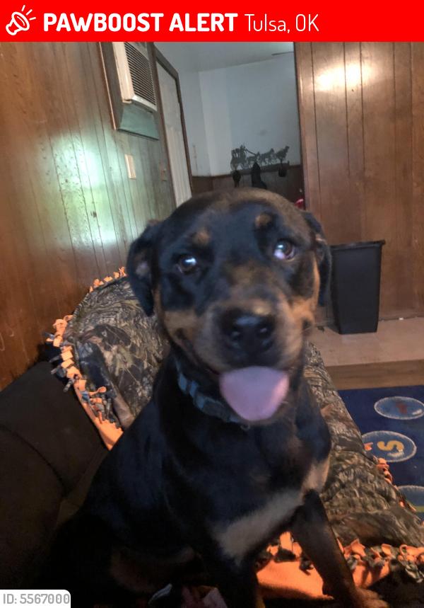 Lost Female Dog in Tulsa, OK 74112 Named Raina (ID: 5567000