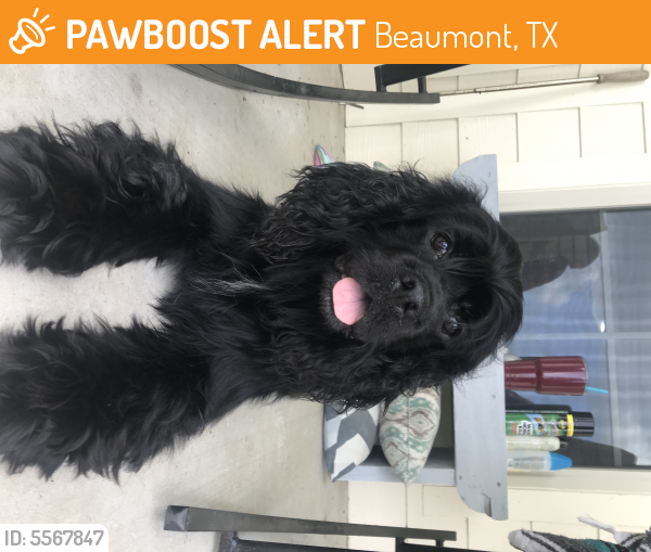 Found/Stray Male Dog last seen Blewett Rd & LaBelle Rd, Beaumont, TX 77705