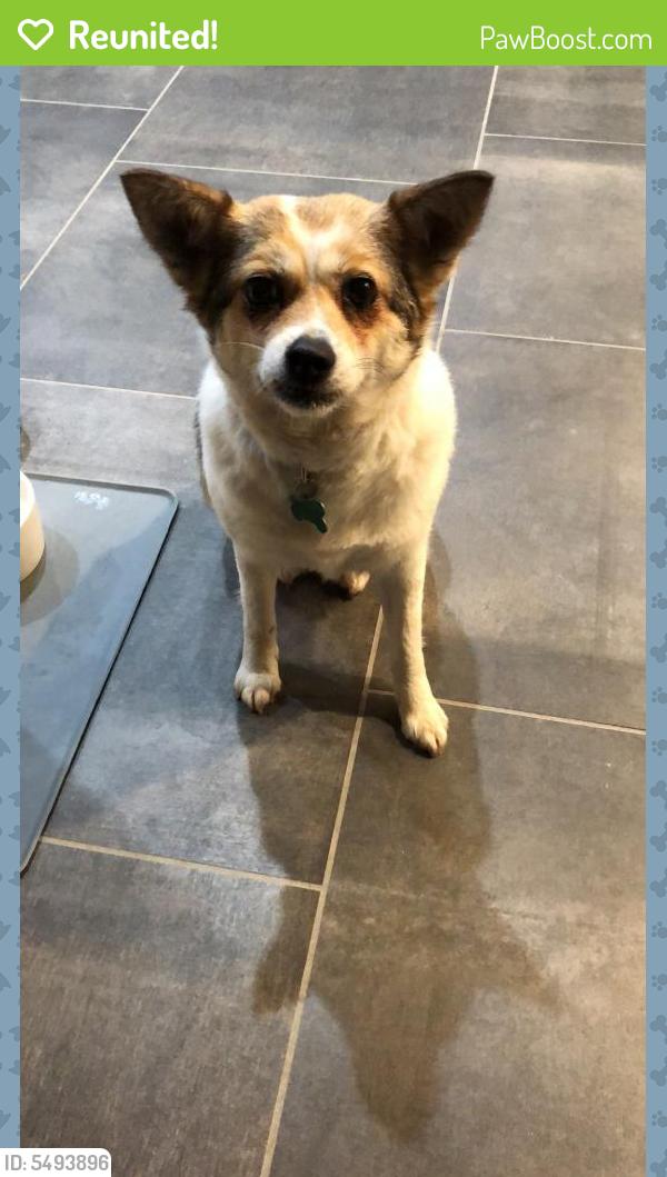 Reunited Female Dog In San Jose Ca 95123 Id 5493896