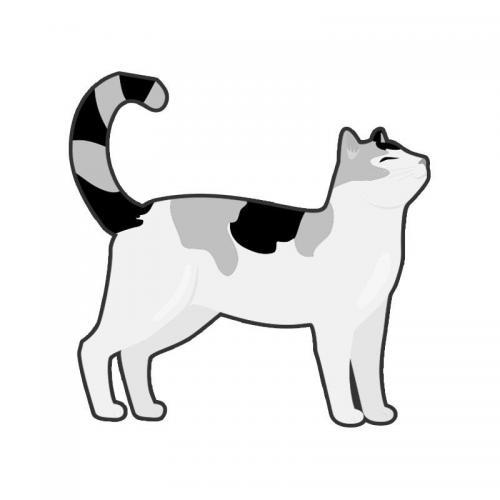 Lost Male Cat last seen Near Davis Ave & Point Reel Rd, Chesapeake, VA 23325