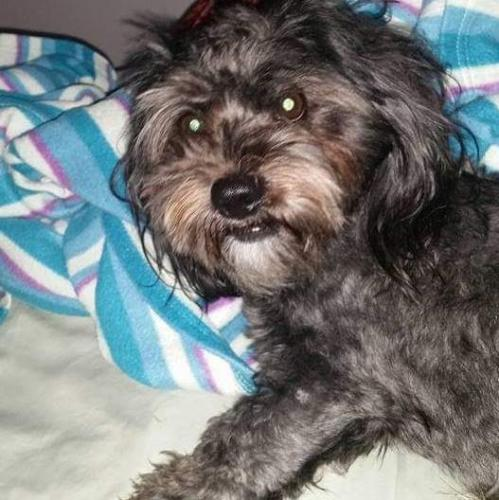 Lost & Found Dogs, Cats, and Pets in North Carolina 28086