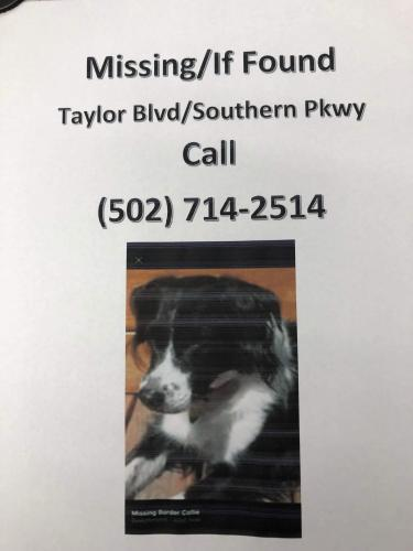Lost & Found Dogs, Cats, and Pets in Louisville, KY 40243 - Page 1
