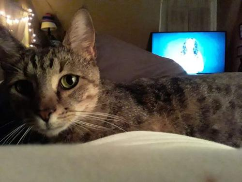 Lost Male Cat last seen Near Ball Ave & Citadel Rd, Norfolk, VA 23518