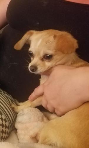 Lost Female Dog last seen Near E Main St & N Ellsworth Rd, Maricopa County, AZ 85207