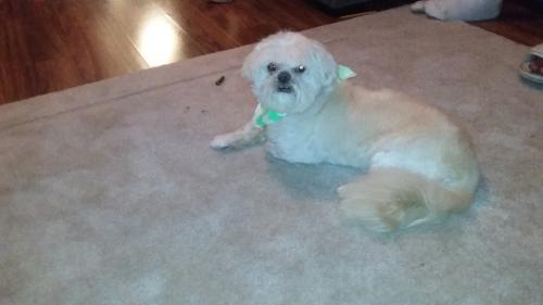 Lost & Found Dogs, Cats, and Pets in Savannah, GA 31407