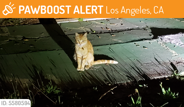 Found/Stray Unknown Cat last seen Near Empire Dr & Regent St, Los Angeles, CA 90034