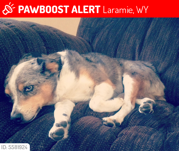 Lost Female Dog last seen Near E Sanders Dr & S 13th St, Laramie, WY 82070