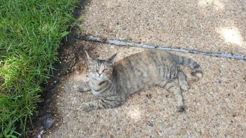 Lost Female Cat last seen Near Berrywood Ct & Berrywood Rd, Virginia Beach, VA 23464