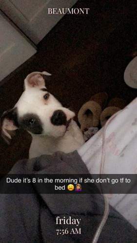Lost Female Dog last seen Near Kenneth Ave & Zavalla Dr, Beaumont, TX 77705