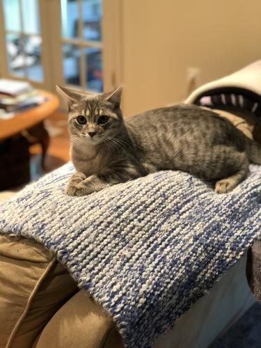 Lost Male Cat last seen Near Renee St & Steinway St, Alexandria, VA 22315