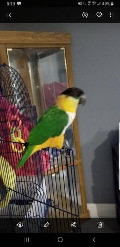 Lost Male Bird last seen Near Weatherford St & Berwick St, Vidor, TX 77662