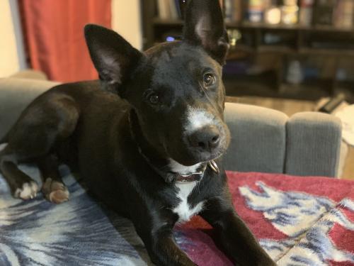 Lost Male Dog last seen Near E Don Carlos Ave & S Smith Rd, Tempe, AZ 85281