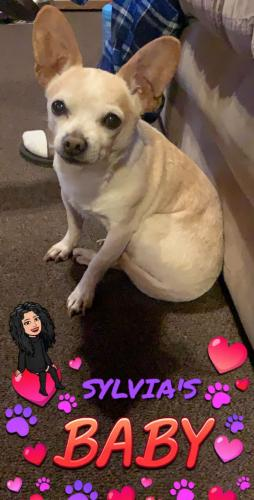 Lost Male Dog last seen Near N Broadway & Lincoln Park Ave, Los Angeles, CA 90031