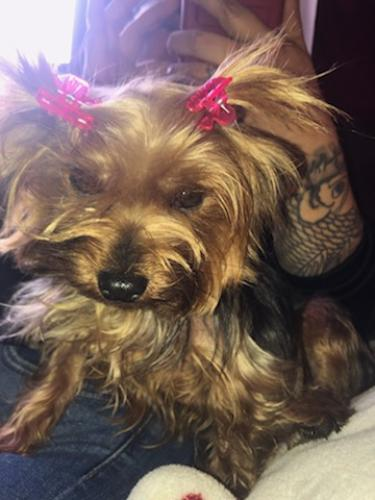 Lost Female Dog last seen Near E 69th St & Muriel Ave, Long Beach, CA 90805