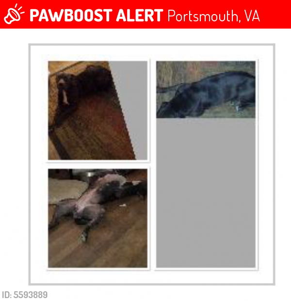 Lost Female Dog last seen Near Magnolia Dr & Towne Point Rd, Portsmouth, VA 23703