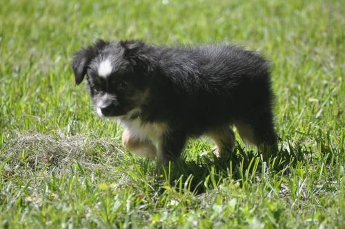 Lost Male Dog last seen Near Cos St & Texas St, Liberty, TX 77575