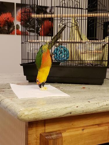 Lost Unknown Bird last seen Near W Naauao St & W Naauao Way, Hilo, HI 96720