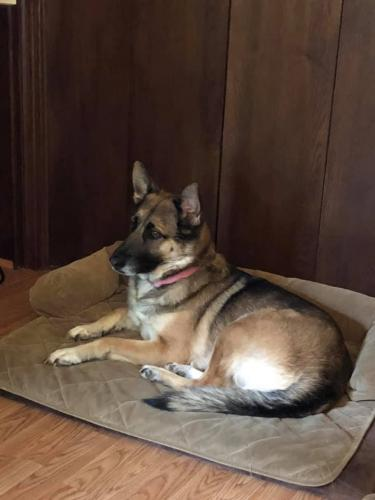 Lost Female Dog last seen Near Interstate 10 Access Road, Beaumont, TX, USA, Beaumont, TX 77705