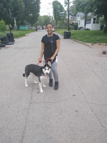 Lost & Found Dogs, Cats, and Pets in Louisville, KY 40242