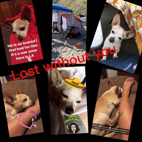 Lost Male Dog last seen Near N Broadway & Sichel St, Los Angeles, CA 90031