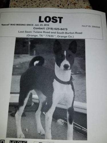Lost Male Dog last seen S Burton @ tulaner, Orange, TX 77631