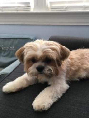 Lost Female Dog last seen Near Beach Dr & Wyndale Rd, Chevy Chase, MD 20815