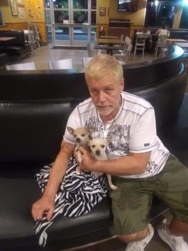 Lost Female Dog last seen Near E Indian School Rd & N 32nd St, Phoenix, AZ 85016