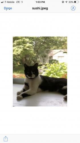 Lost Male Cat last seen Near Grantham Ave & Surrey St, Chevy Chase, MD 20815