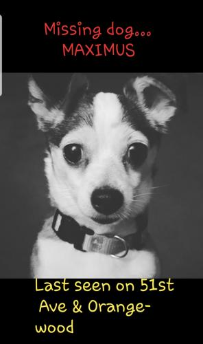 Lost Male Dog last seen Near N 51st Ave & Orangewood , Glendale, AZ 85304