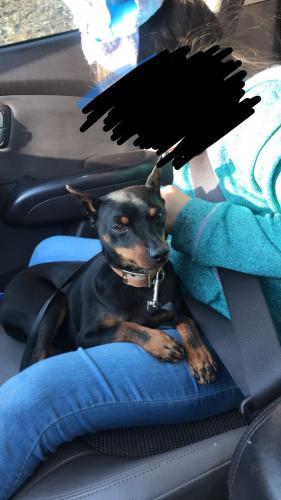 Lost Male Dog last seen Near W Douglas St & N Culver Ave, Compton, CA 90222