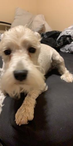 Lost Male Dog last seen Near W Julie Dr & N 33rd Ave, Phoenix, AZ 85027