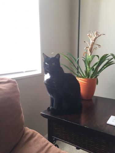 Lost Male Cat last seen Near Overbrook St & Crimmins Ln, Falls Church, VA 22043
