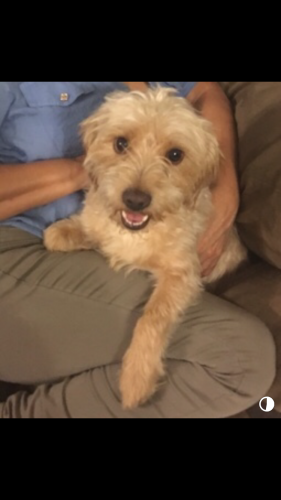 Lost Male Dog last seen Near Santa Anita Ave & Klingerman St, Los Angeles County, CA 91733