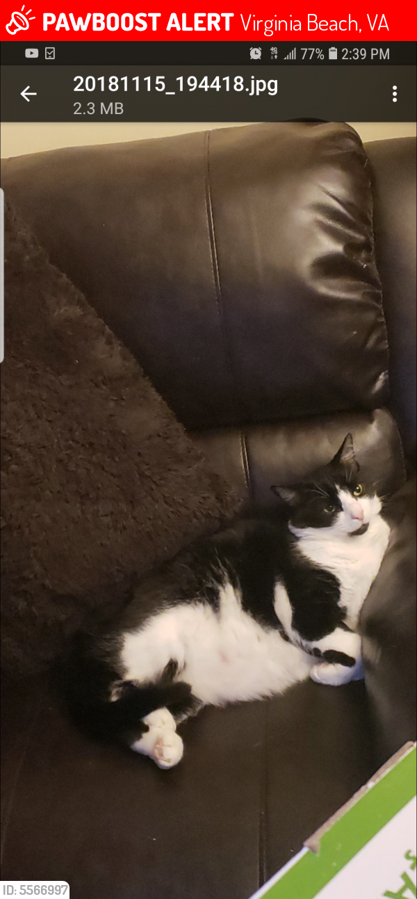 Lost Male Cat last seen Near N Palm Ave & Virginia Beach Blvd, Virginia Beach, VA 23452