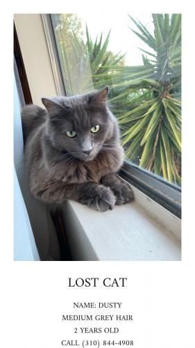 Lost Male Cat last seen Near Lemoli Ave & Lemoli Way, Hawthorne, CA 90250