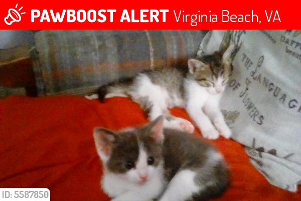 Lost Unknown Cat last seen Near Princess Anne Rd & W Neck Rd, Virginia Beach, VA 23456