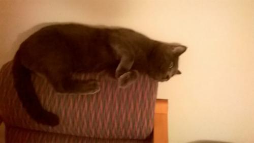 Lost Male Cat last seen Near Gifford St & Hilton St, Norfolk, VA 23518