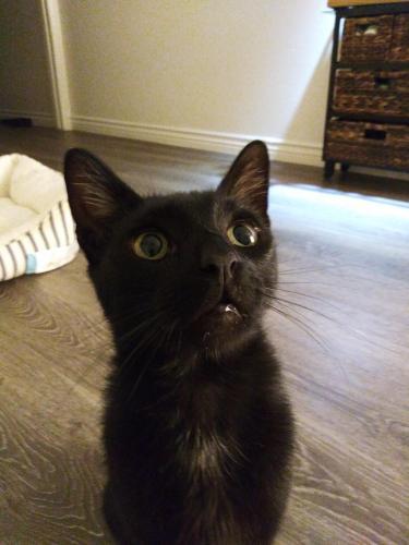 Found/Stray Male Cat last seen Near 67th St & E 67th St, Long Beach, CA 90805
